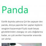 Lumia_620_Word