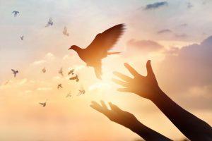 aşk güvercin
